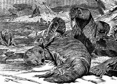 Victorian Animal Illustrations Stamps Antique Walrus Era