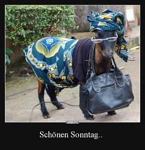 Lustige Bilder Sonntag : sch nen sonntag lustige bilder spr che witze echt lustig ~ Frokenaadalensverden.com Haus und Dekorationen