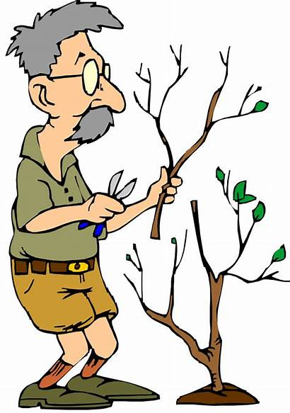 Tree Pruning Clipart Trimming Rarely Clip Photosynthesis