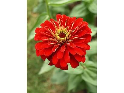 Flower Hibiscus Artistic Jooinn Hq