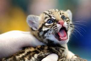 Funny Pictures: Cute Baby Animal Pictures