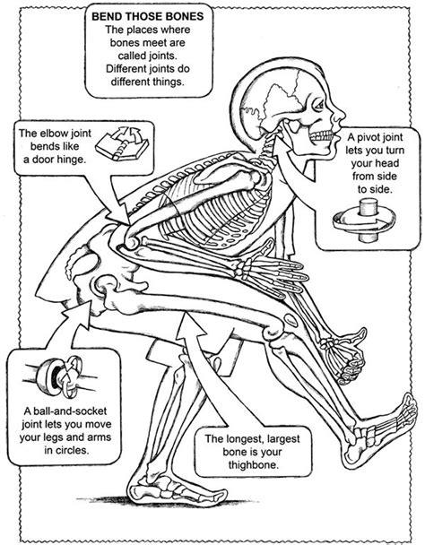 anatomy of a bone coloring bone joints bones coloring bones free bone names facts