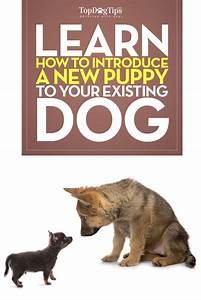 how to introduce your puppy to an existing dog step by With how to introduce a new puppy to your dog