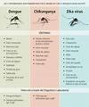 Las 3 enfermedades que trasnsmite el mismo vector aegypti ...