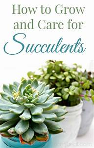 how to grow and care for succulents With how to take care of a garden