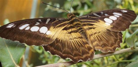 Botanischer Garten Kiel Braun by S 252 223 Er Traum Zweig Braun Schmetterling Fotografie