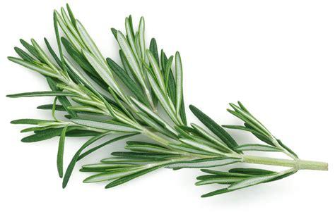 les aromatiques au jardin cuisine et bienfaits bien