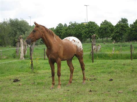 Wie Viel Euro Kostet Ein Pferd