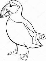 Puffin Coloring Pages Cartoon Rock Bird Colouring Atlantic Vector Illustration Star Printable Izakowski Template Successful Getcolorings Depositphotos Print Getdrawings Sketch sketch template