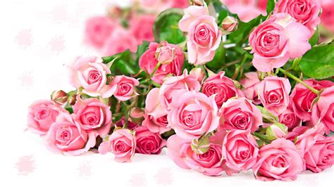 Check spelling or type a new query. World's Top 100 Beautiful Flowers Images Wallpaper Photos ...