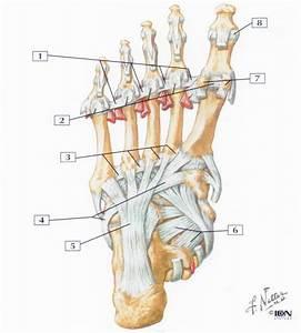Atht 1821 Study Guide  2013-14 Conley
