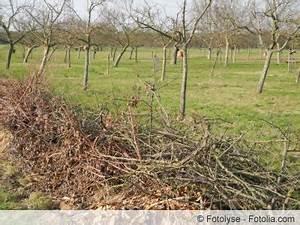 Bis Wann Hecke Schneiden : vogelschutzhecke anlegen wann darf man hecken schneiden ~ Frokenaadalensverden.com Haus und Dekorationen
