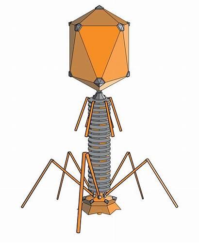 Bacteriophage Wikipedia Wiki