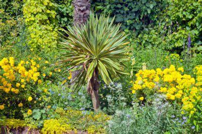 Yuccapalme Im Garten » Diese Palmlilienarten Können Sie
