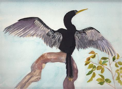 bunnys artwork anhinga bird watercolor painting