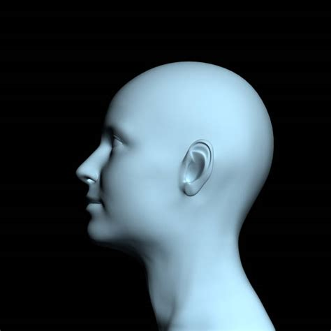 Best Human Head Stock Photos Pictures Royalty Free