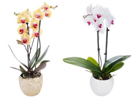 entretenir une orchid 233 e avec alysson