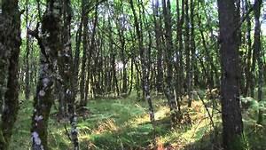 Foret à Bois : foret a vendre correze ~ Nature-et-papiers.com Idées de Décoration
