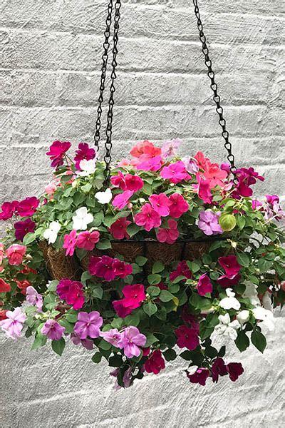 shade loving outdoor plant   flower hanging basket