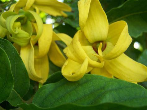 whats  bloom mounts botanical garden  palm beach county