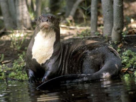 terrifying creatures   amazon river listverse