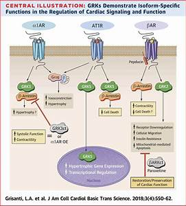Designer Approaches For G Protein U2013coupled Receptor