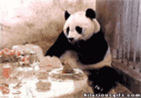 Sneezing Panda Meme - sneezing baby panda know your meme