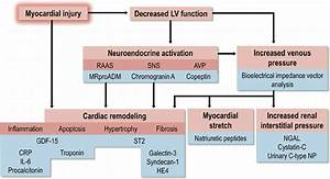 Pathophysiology Of Heart Failure  Which Is Reflected By