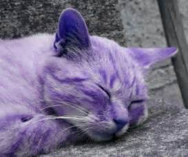 purple cat the purple cat cats
