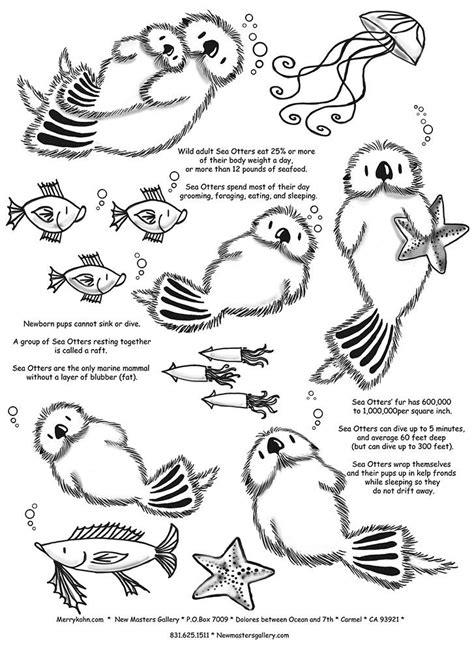 Otter Kleurplaat by Otter Facts Coloring For Baby Sea Otters