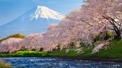 sakura river japan p resolution hd