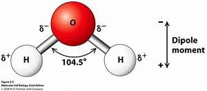 How Many Hydrogen Bonds Are Attached To Each Water