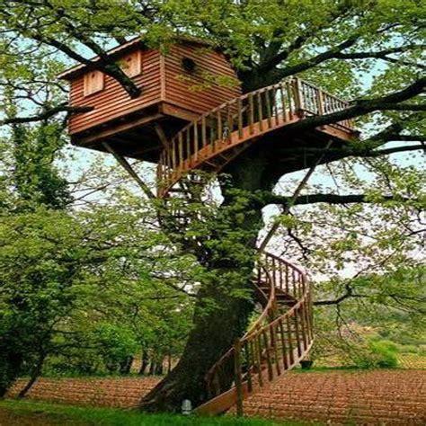 maisons dans les arbres maison dans les arbres your favorite pins