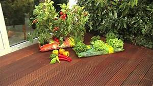 Pferdemist Für Tomaten : tomaten und paprika grow bags f r den balkong rtner youtube ~ Watch28wear.com Haus und Dekorationen