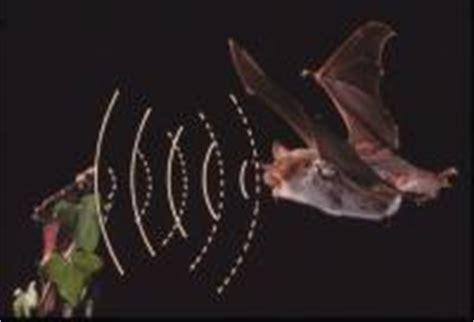 echolocation bat conservation trust