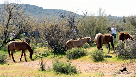 horses wild value burros horse river salt animals habitat natural watching most exist management recreational obvious frequent visitors tourism eco