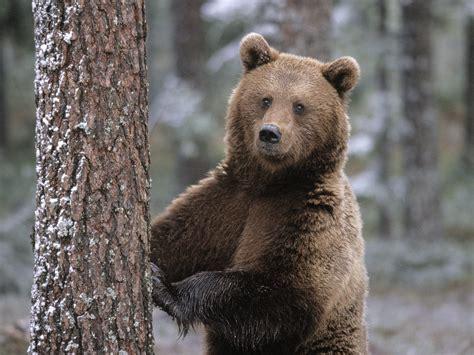Медведь описание. где живут медведи? все виды.