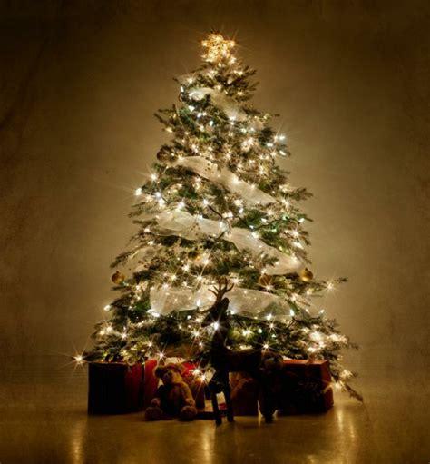 weihnachtsbaum mit beleuchtung 40 unikale fotos