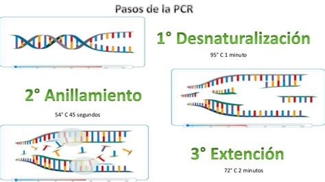fundamentos de la pcr