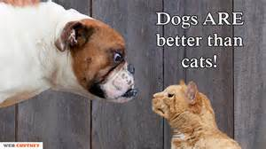 why are dogs better than cats the reason why dogs are better than cats webchutney