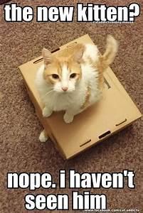 30 Funny animal captions - part 56 (30 pics) | Amazing ...