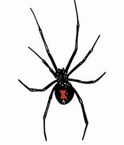 Black Widow Spiders  U0026gt  Mountain Home Air Force Base