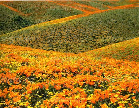 sfondi fioriti photographer foto fiori paesaggi fioriti n 38