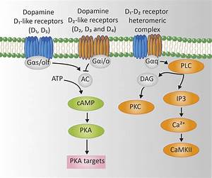 Signaling Networks Regulated By Da In D1