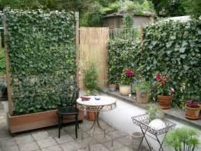 balkon sichtschutz efeu gpp helix pflanzen gmbh