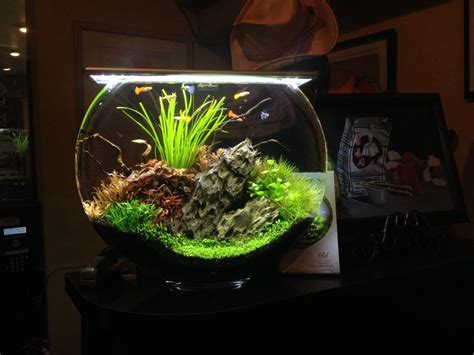 images  aquascaping nano aquariums