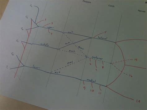draw  brachial plexus snapguide