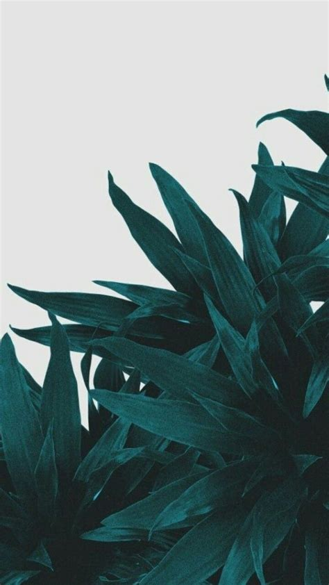 olive green floral iphone wallpapers top  olive