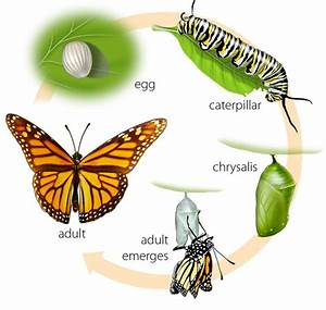Myth And Legend  Symbols Of The Butterfly