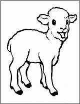 Coloring Lamb Pages Sheep Animals Outline Printable Animal Drawing Colouring Farm Template Fun Children Clipart Paintingvalley Bestcoloringpagesforkids Popular sketch template